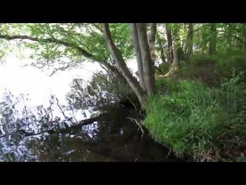 oven bird, wood thrush and veery songs