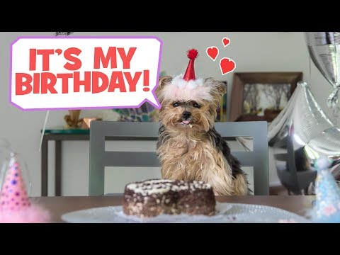 Throwing My Dog A Birthday Party - DIY