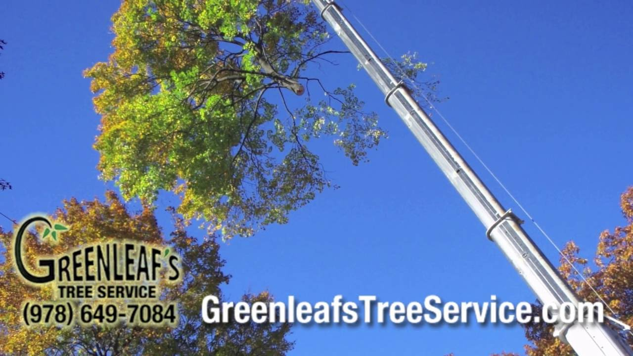 Greenleaf S Tree Service Fully Insured Removal In Ma