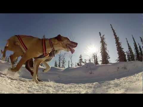 2012 North American Sled Dog Race