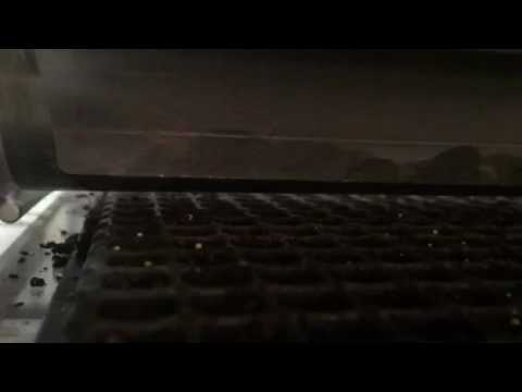 Drum View - Seed Drop Failure