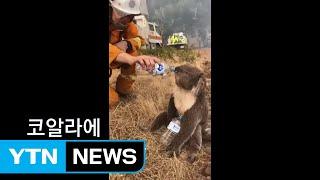 [영상] 최악의 호주 산불...신음하는 코알라·캥거루 / YTN