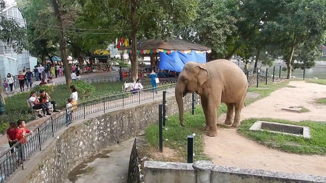 Thu Le Zoo Hanoi