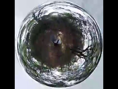 Tiny planet walking around the woods