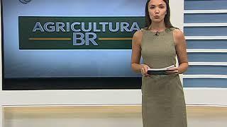 PRODUÇÃO MILHO 2ª SAFRA PR E MS  - 02/05/2018