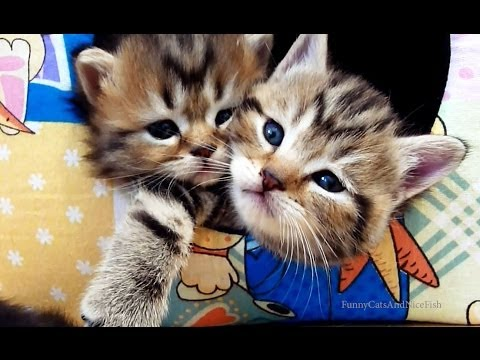 Cutest Kittens and Cats Couples