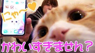 一秋さんの愛猫登場!!自粛宅飲み開始!! 【RHYTHM】