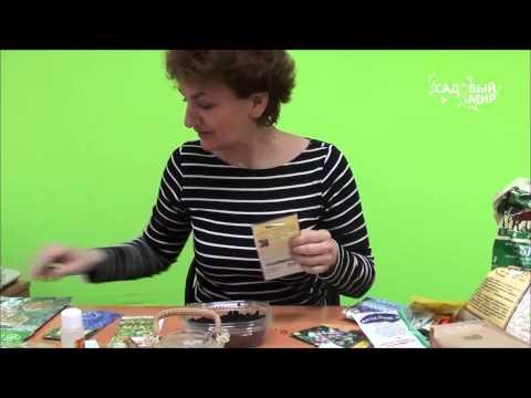 Как вырастить флоксы из семян в домашних условиях видео