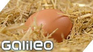 Eier - die heimlichen Superhelden | Galileo | ProSieben