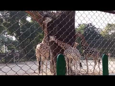 Kolkata Alipore  Zoo || Awesome Experience || Must Watch || Part-1