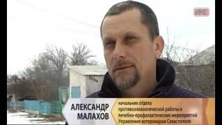 В сельской зоне Севастополя прошла вакцинация домашних животных