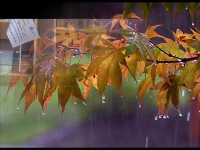 Изображение предпросмотра прочтения – ВикторияНикулина читает произведение «Осень» А.Н.Майкова