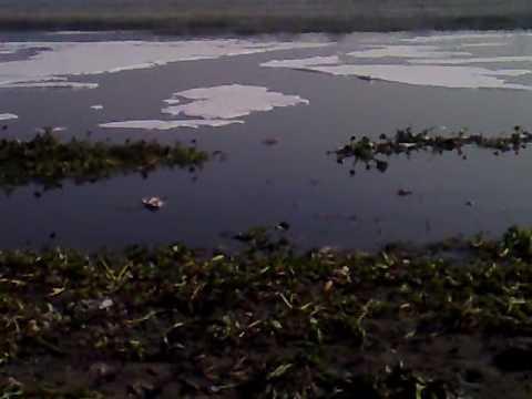 meri dilli meri yamuna kalindi kunj ghaat before cleaning