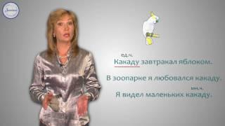 Русский 2 Слова названия предметов, у которых нет окончаний