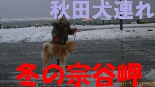 Time for walkies! Walky time! It's freezing. Sea of Okhotsk.Cape ...