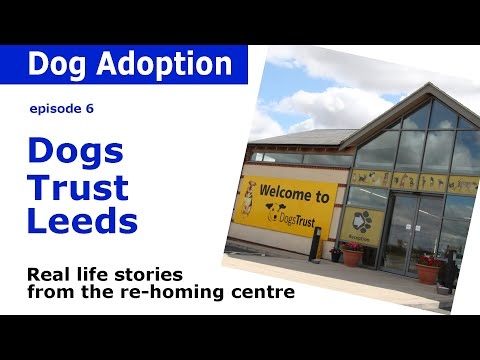Dogs Trust Documentary - Episode 6
