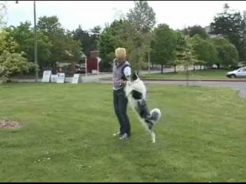 Dog training - 101 Ways To Think Outside The Box - Emily Larlham