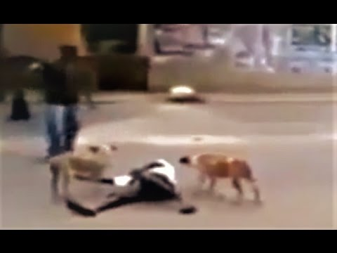 Stray dogs protecting a homeless man!!!