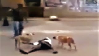 Stray dogs protecting a homeless man!!! thumbnail