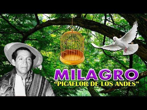 Picaflor De Los Andes - MILAGRO