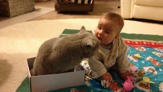 Самый Преданный Кот, защищает младенца! Приколы с Детьми! Funny Kids!