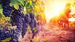 Sedona Verde Vally Wine Tours | First Class Private Wine Tours Arizona