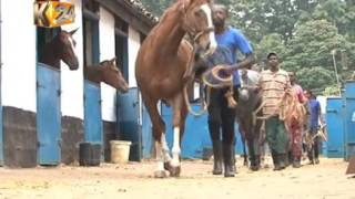 A pedigree horse can cost as much as Kshs 70 Million