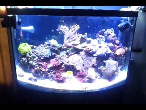 cheap led lighting for a reef tank that works