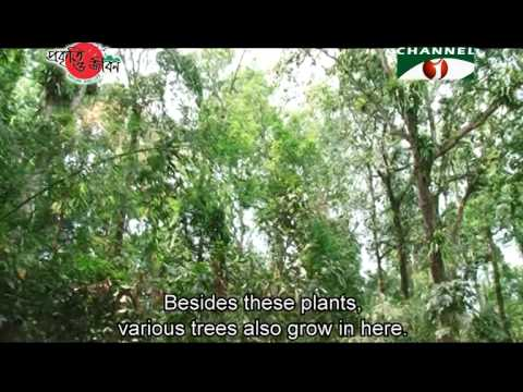Nature and Life - Episode 157 (Chunati Wildlife Sanctuary)