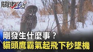 什麼!剛發生什麼事?沒被看到吧! 貓頭鷹霸氣起飛下秒「墜機」! 關鍵時刻 20180719-3 朱學恒
