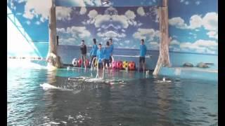 Шоу дельфинов в Паттайе. Дельфинарий в Паттайе.