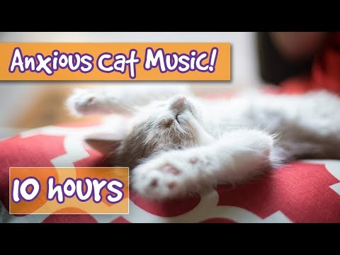 How to Make Your Cat Calm! The Ultimate Music Playlist to Soothe and Relax Anxious or Upset Cats! 🐈