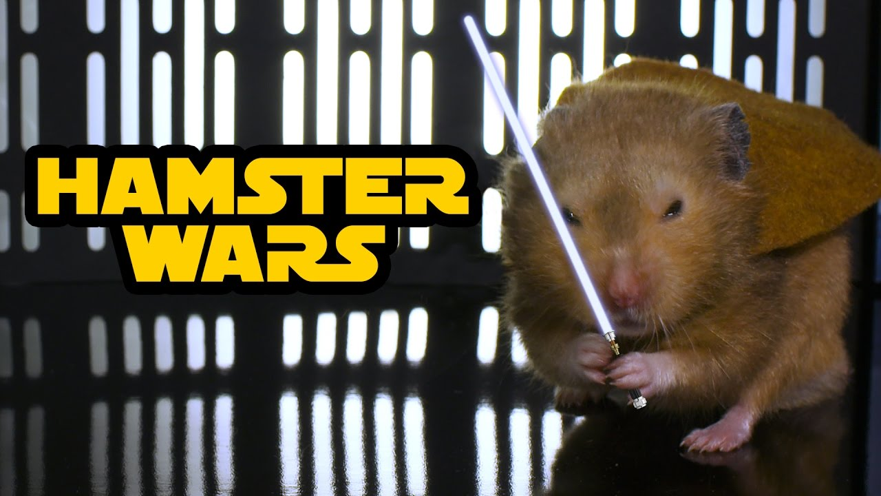 Hamster Wars - 'Star Wars' with Hamsters
