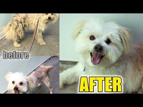 Abandoned Dog Surprises Everyone: Amazing Recovery animal video