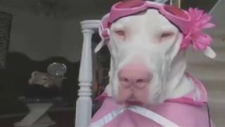 Animals never fail to make us laugh II Super funny animal compilation