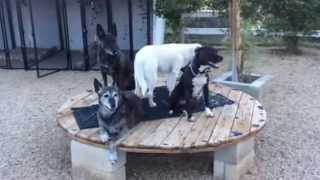 Aggressive Dog Training San Diego-pit Bull