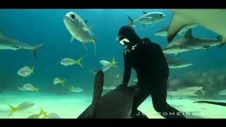 Requins Malaguena.flv