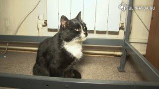 Спасенный в Ульяновске кот в мешке стал заместителем министра по охране животного мира