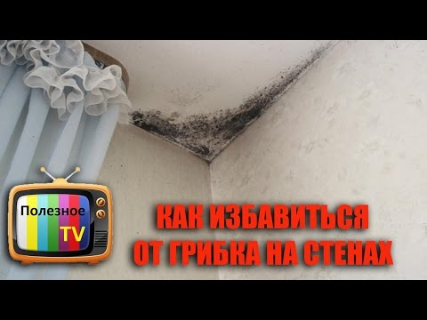 Как вывести грибок со стен в домашних условиях