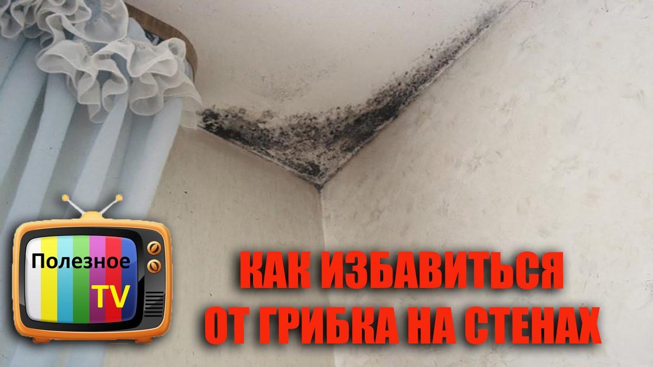 Средство от плесени и грибков на стенах от стахема. Плесень в ванной комнате и грибокпоявляются через ряд факторов. Если применить средство.