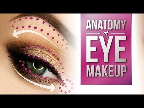 Anatomy of Eye Makeup | Pretty Smart