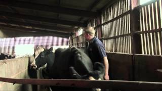 A young farmer: the stressful TB testing of his herd