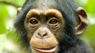 10 Most Intelligent Animal Species