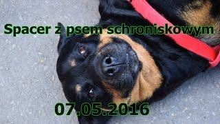 Spacer z psem schroniskowym 07.05.2016