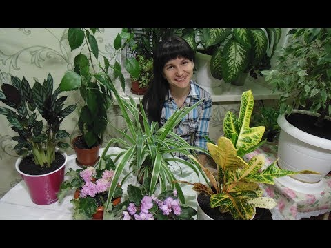 Комнатные цветы  Обзор комнатных растений.