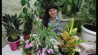 Комнатные цветы  Обзор комнатных растений. - Видео от Анна Журавлева