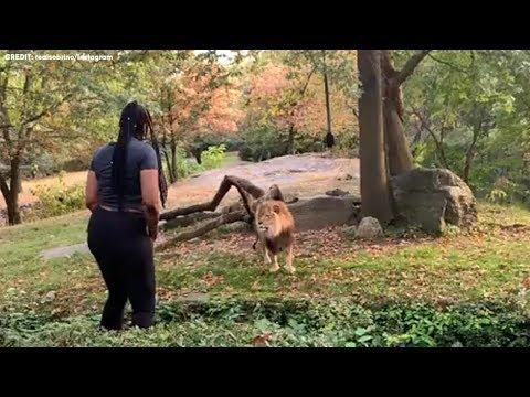 Entra en el recinto de un león en un zoo y se pone a bailar junto a él