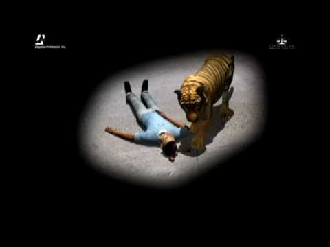Tiger Attack - YouTube
