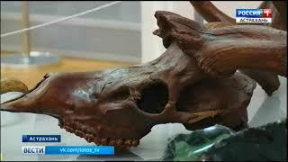видео В коллекции «Фаэтона» появились уникальные экспонаты