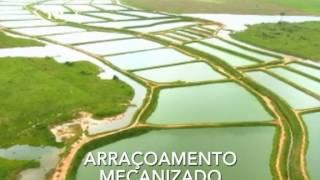 CRIAÇÃO DE TAMBAQUI EM RONDÔNIA (NOVA ESPERANÇA)